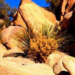 cactus-in-rocks