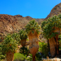 49-palms-oasis-4