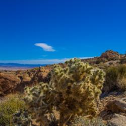 49-palms-oasis-trail-cholla-cactus