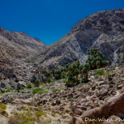 49-palms-oasis-trail-joshua-tree-park-3