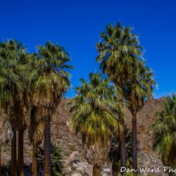 49-palms-oasis-trail-joshua-tree-park-palm-trees