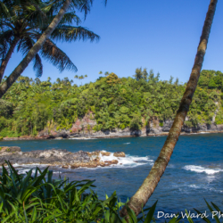hilo-coast-jungle