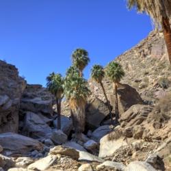palm-canyon-3