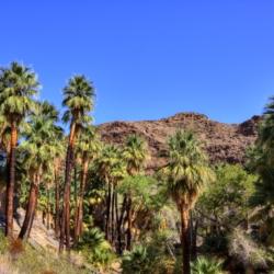 palm-canyon-4