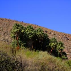 palm-canyon-5