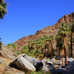 palm-canyon-6