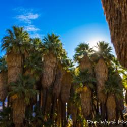 Murray Canyon Palms-1