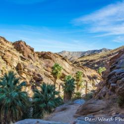 Murray Canyon Palms-3