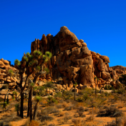 joshua-trees-rock-formation-2