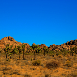 joshua-trees-rock-formation-3