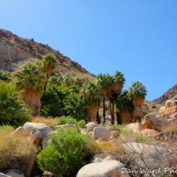 49-palms-oasis-1