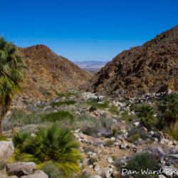 49-palms-oasis-trail-joshua-tree-park-4