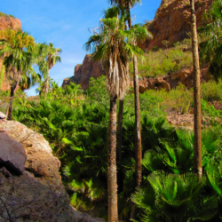 canyon-de-nacapule