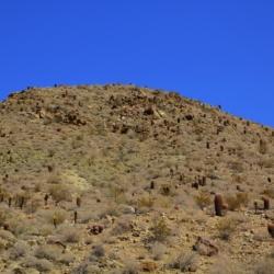 mountain-of-cactus