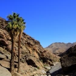 palm-canyon-1