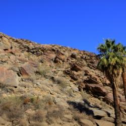 palm-canyon-2
