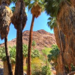 palm-canyon-7