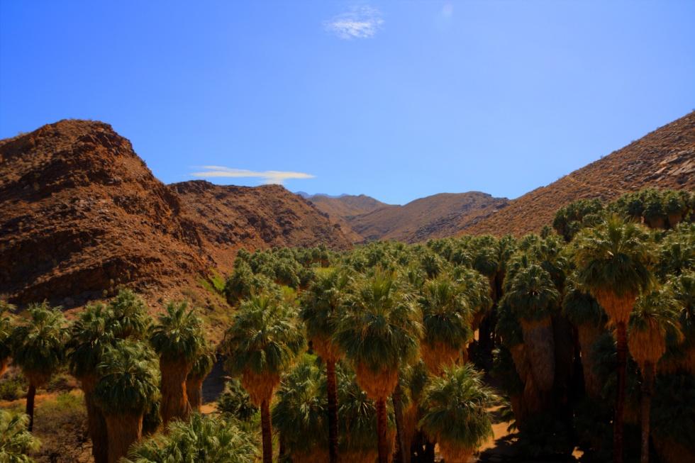 palm-canyon-8