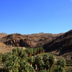 palm-canyon-9