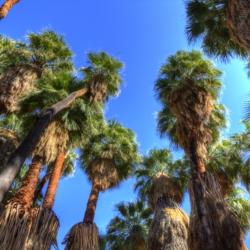 palm-tree-canopy