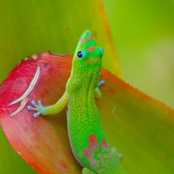 Gecko-2