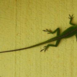 Gecko-3