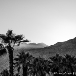 Palm Trees B&W