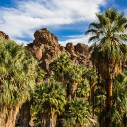 Palms & Rocks-1