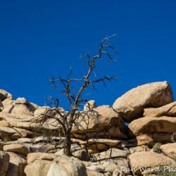 Deadwood-Joshua Tree Park-2