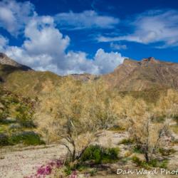 Anza-Borrego Desert State Park-10 (1 of 1)