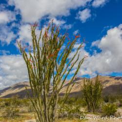 Anza-Borrego Desert State Park-13 (1 of 1)