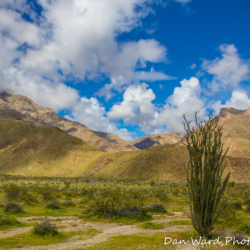 Anza-Borrego Desert State Park-9 (1 of 1)