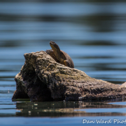 Terrapin-Lake Britton-June 2019-2 (1 of 1)