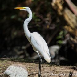 Egret-1 (1 of 1)