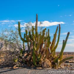 Cactus-Pinacate Bioshpere Reserve-November 2019-1 (1 of 1)
