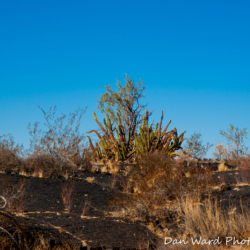 Lava Beds-Schuk Taok Museum-Pinacate Bioshpere Reserve-November 2019-6 (1 of 1)