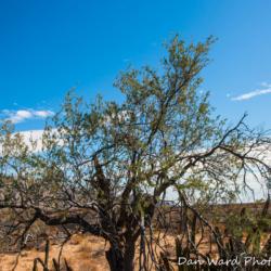 Palo Fierro-Pinacate Bioshpere Reserve-November 2019-1 (1 of 1)