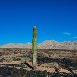 Saguaro-Pinacate Bioshpere Reserve-November 2019-1 (1 of 1)