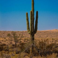 Saguaro-Pinacate Bioshpere Reserve-November 2019-3 (1 of 1)