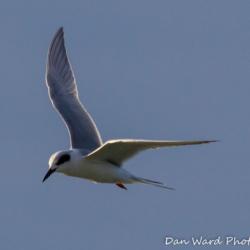 Tern-3 (1 of 1)